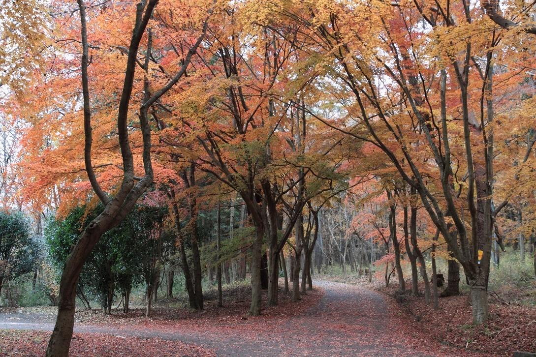 井頭公園・秋の散歩道17㉒