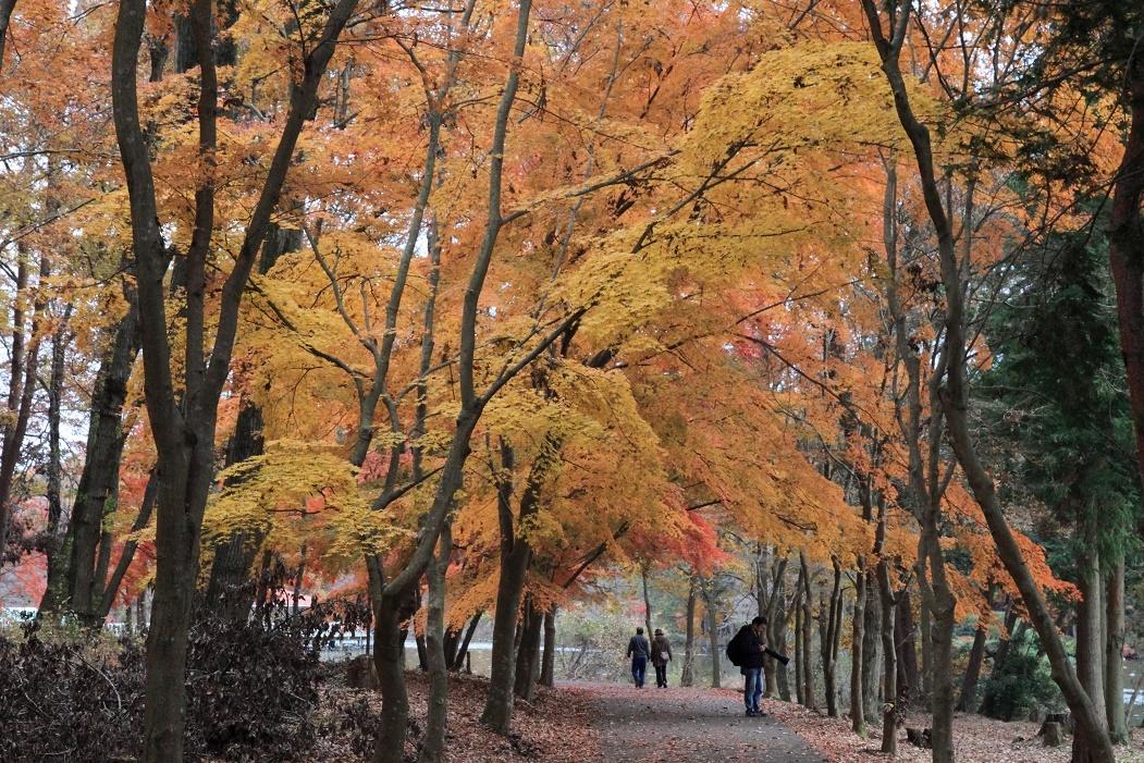 井頭公園・秋の散歩道17㉓