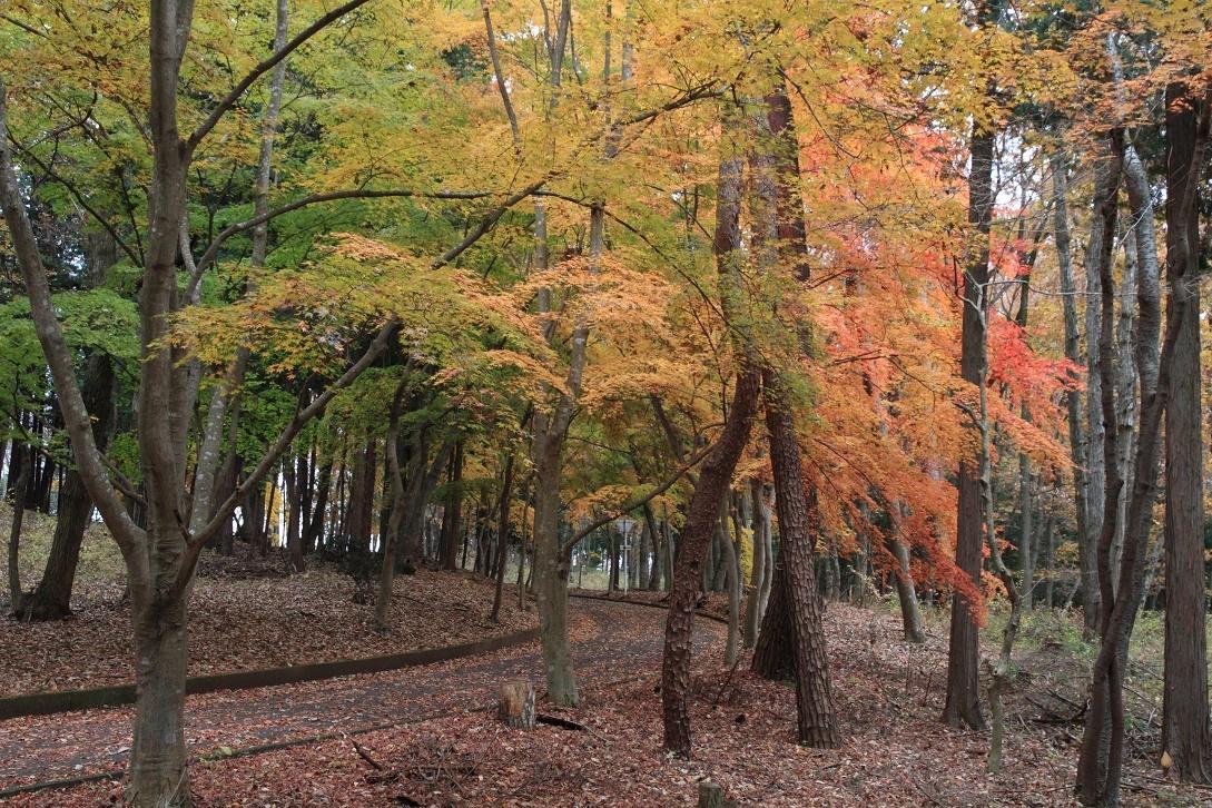 井頭公園・秋の散歩道17㉔
