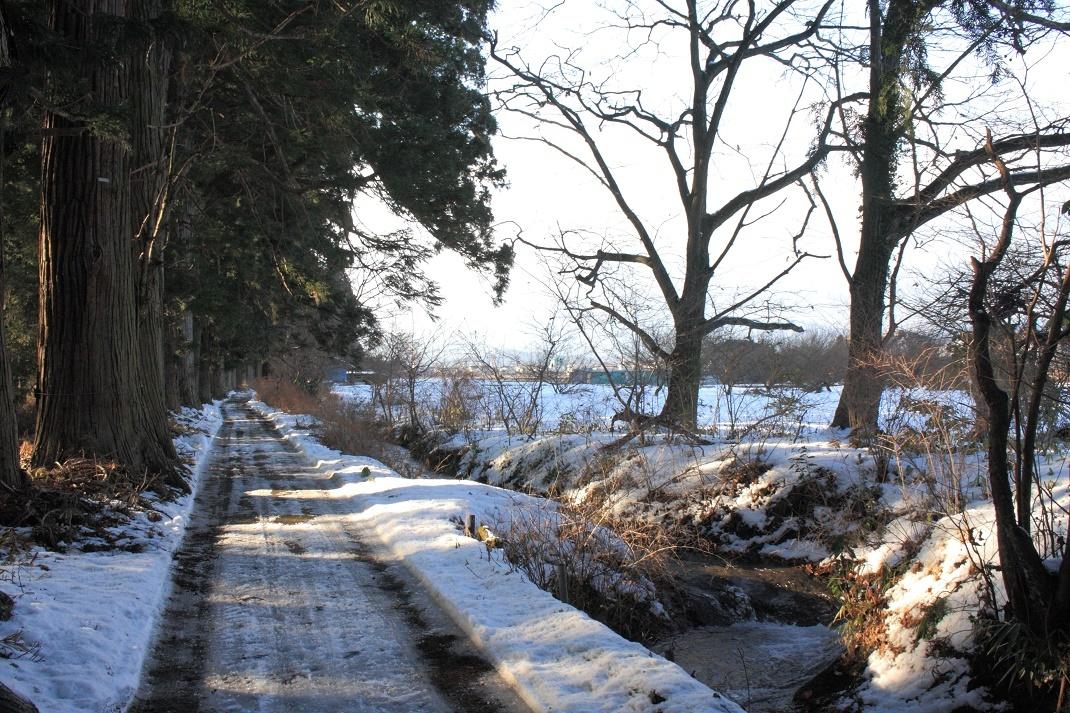冬の日光杉並木18③