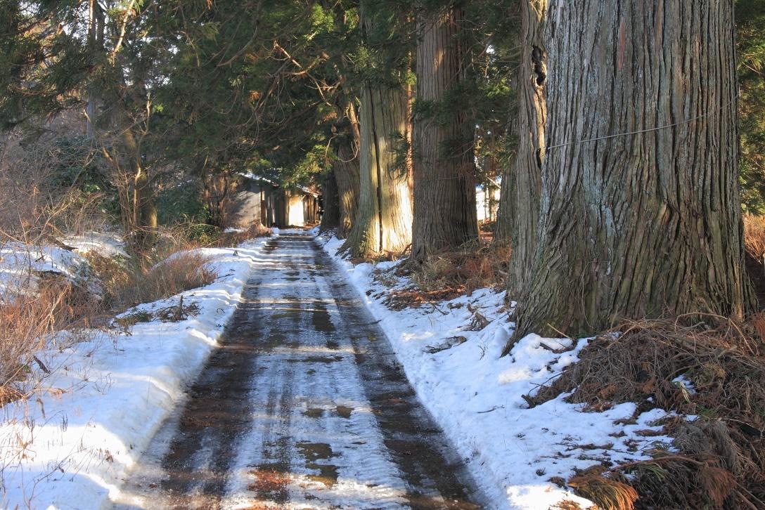 杉並木沿いの残雪①