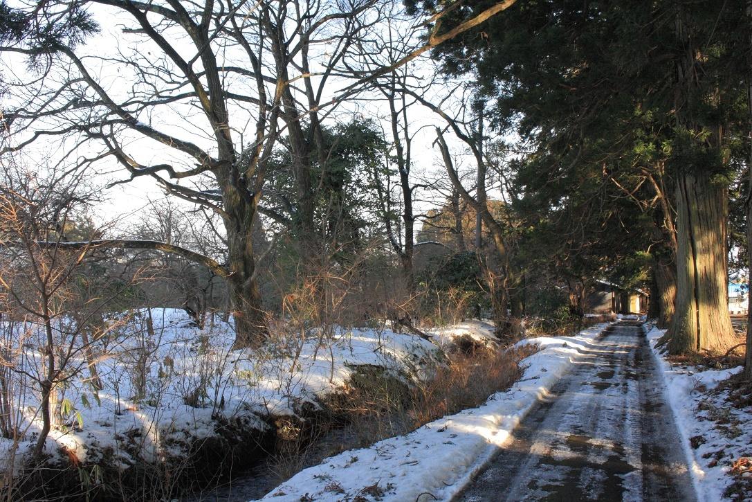 杉並木沿いの残雪②