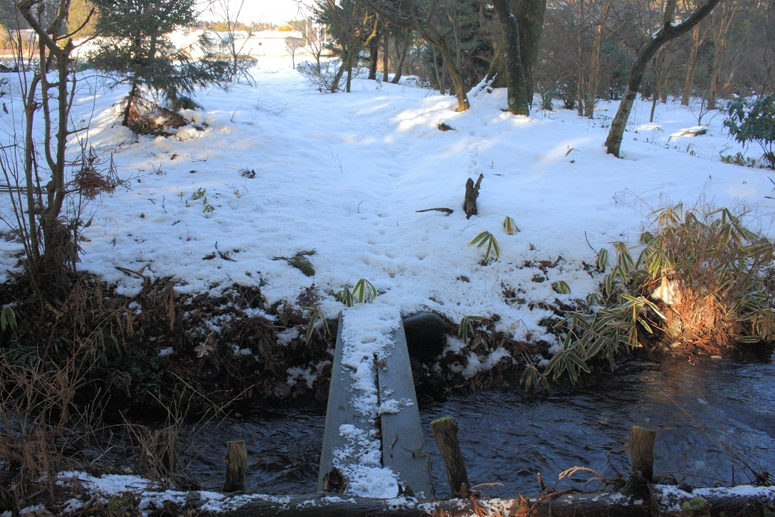 杉並木沿いの残雪③