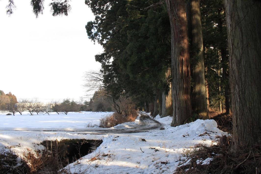 杉並木沿いの残雪④