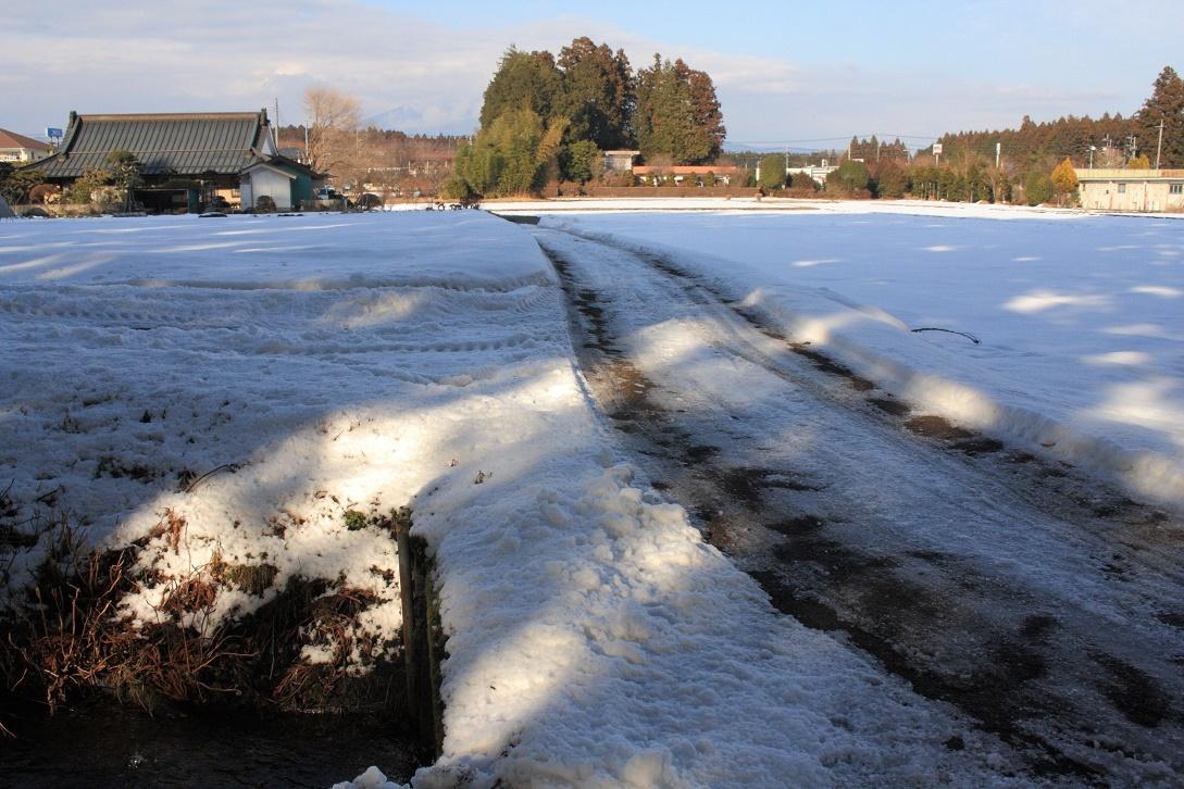 杉並木沿いの残雪⑤