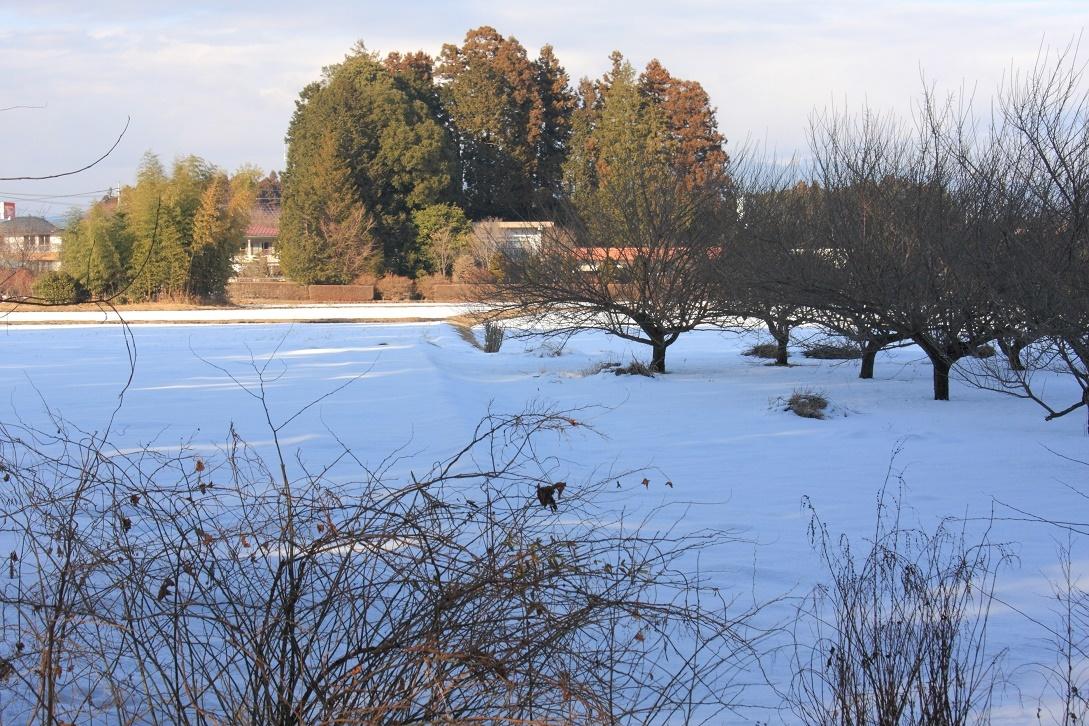 杉並木街道沿いの残雪①