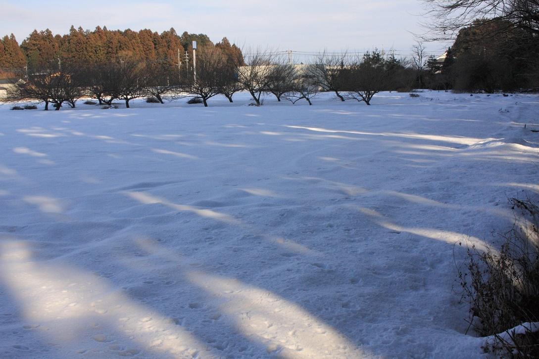 杉並木街道沿いの残雪②