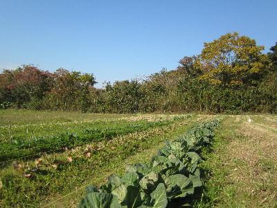 新しい農園 (2)