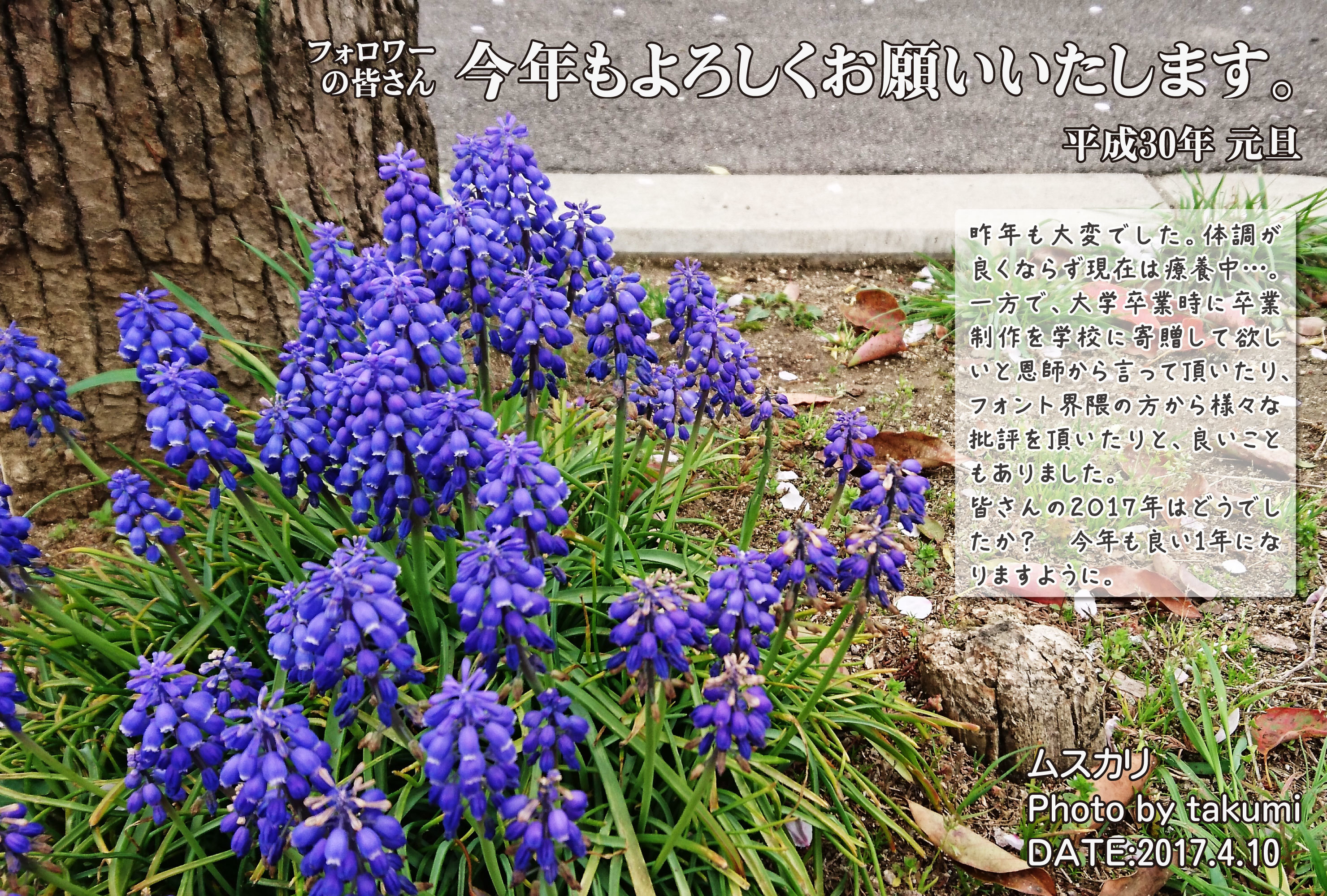 年賀状2018用takumi