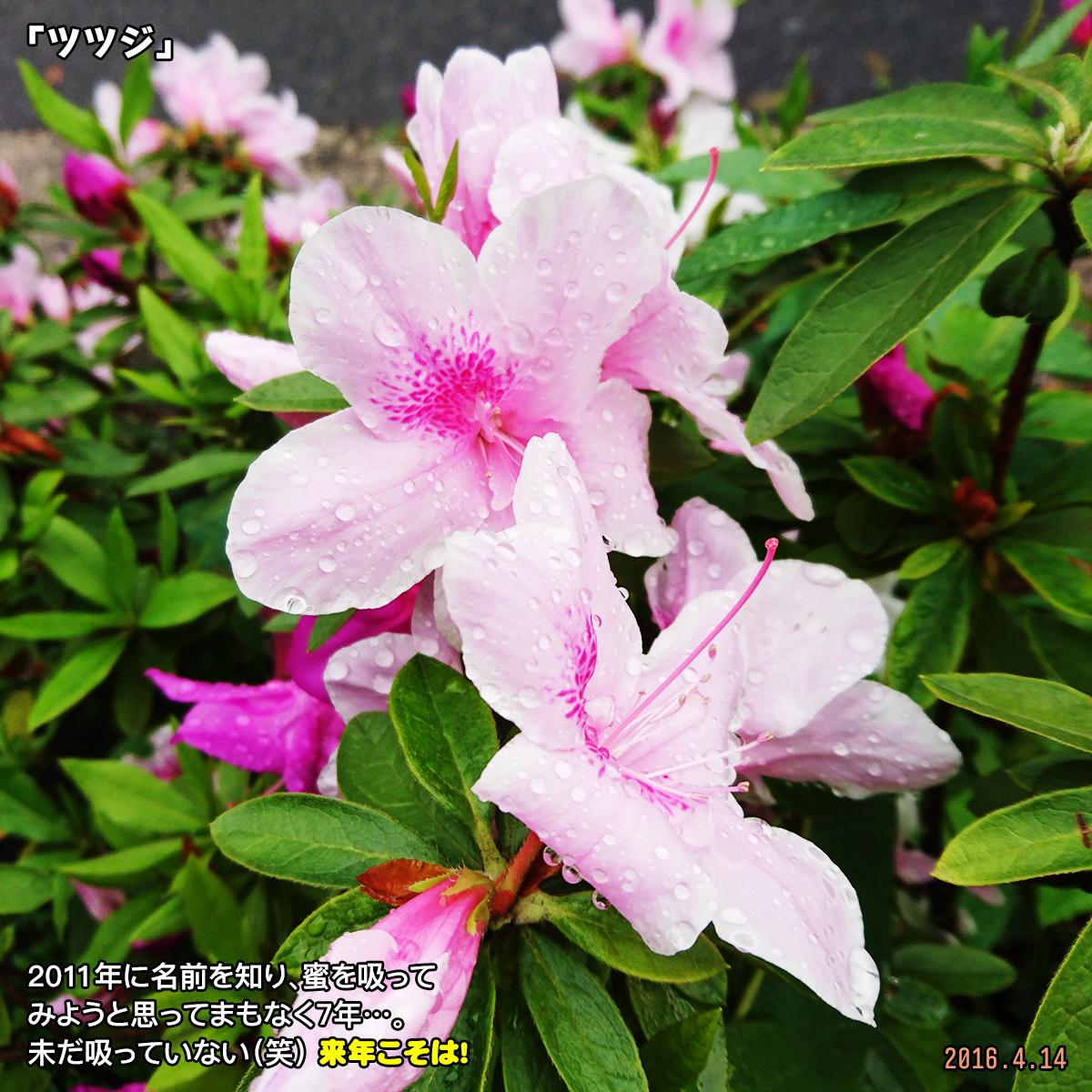 DSC_0467_20171230215716167.jpg