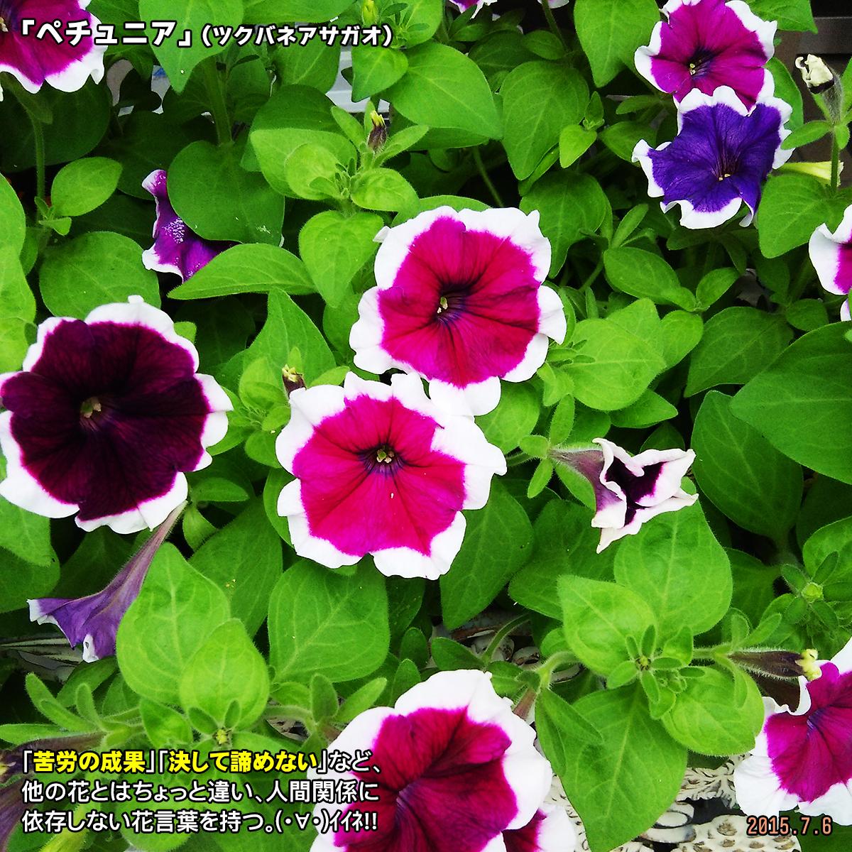 DSC_0565_2017122916304878f.jpg