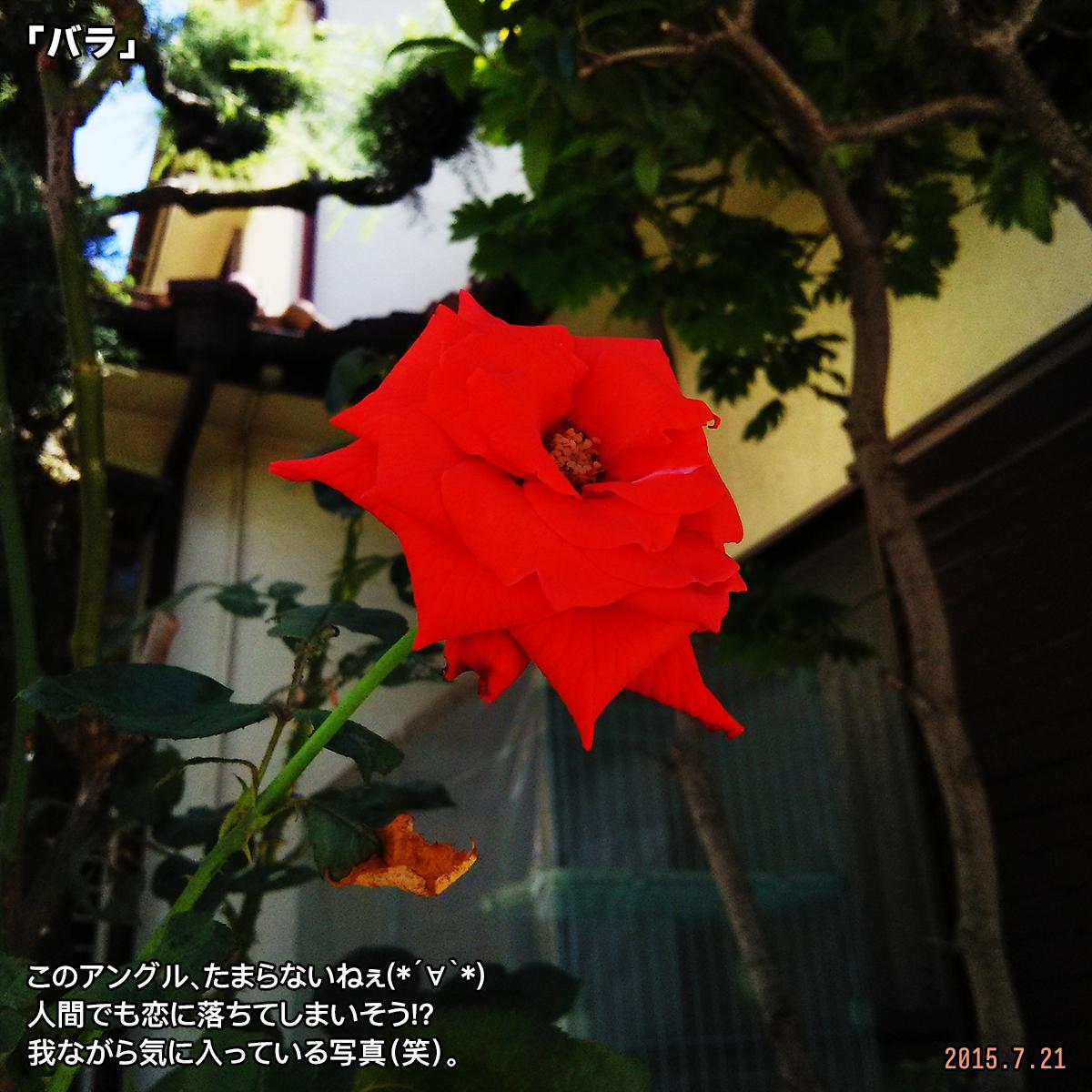 DSC_0729_201801062201472d9.jpg