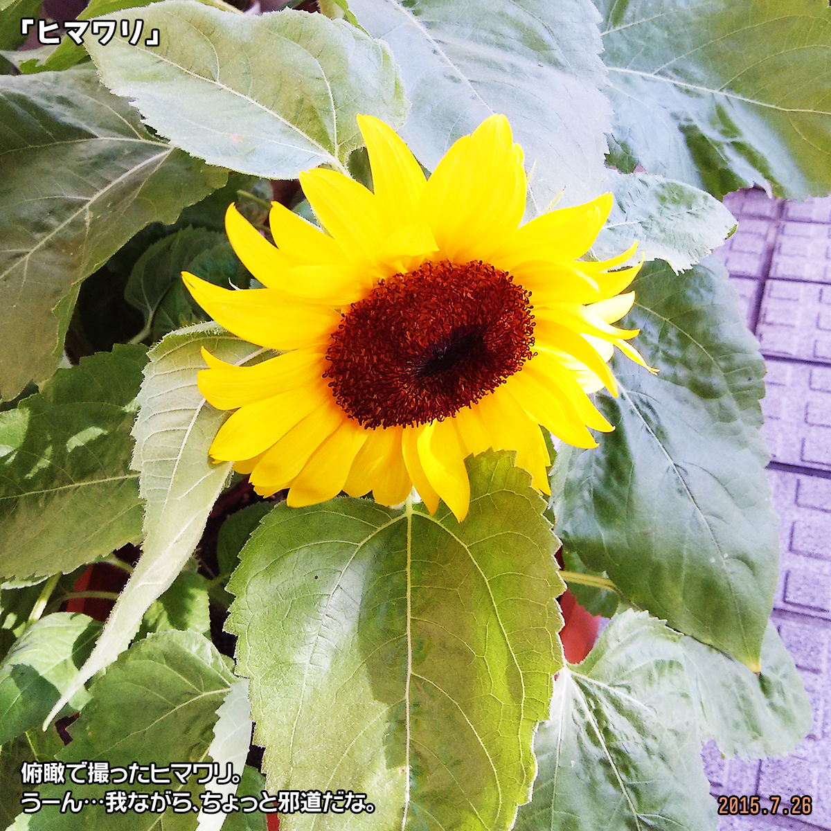 DSC_0766_20180131193156ba5.jpg