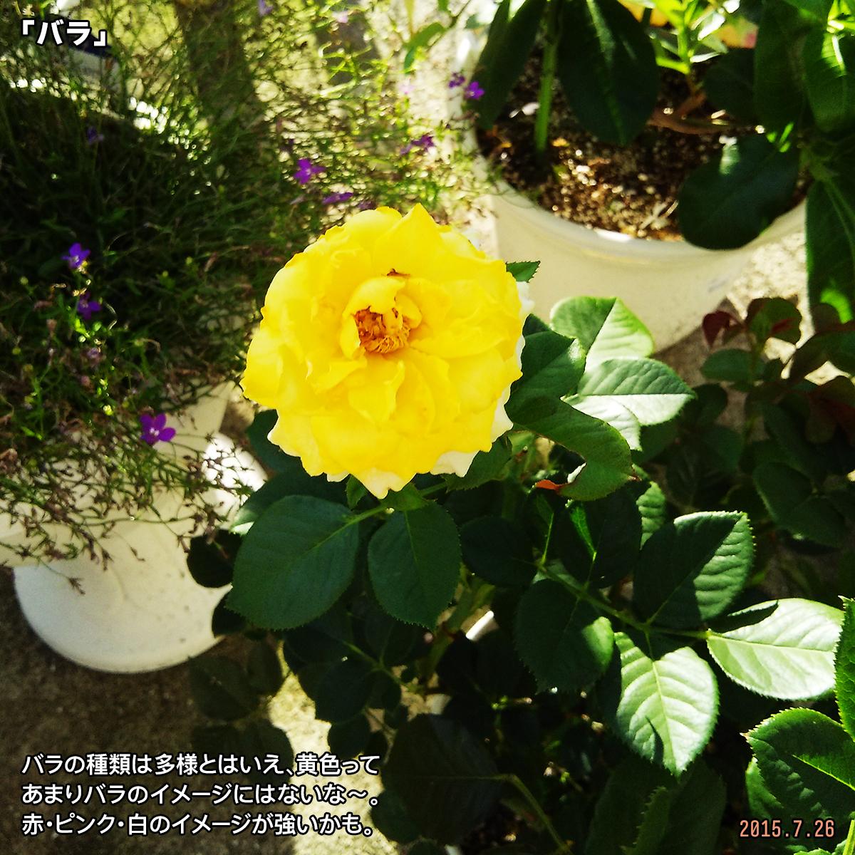 DSC_0799_20180115194916fa5.jpg