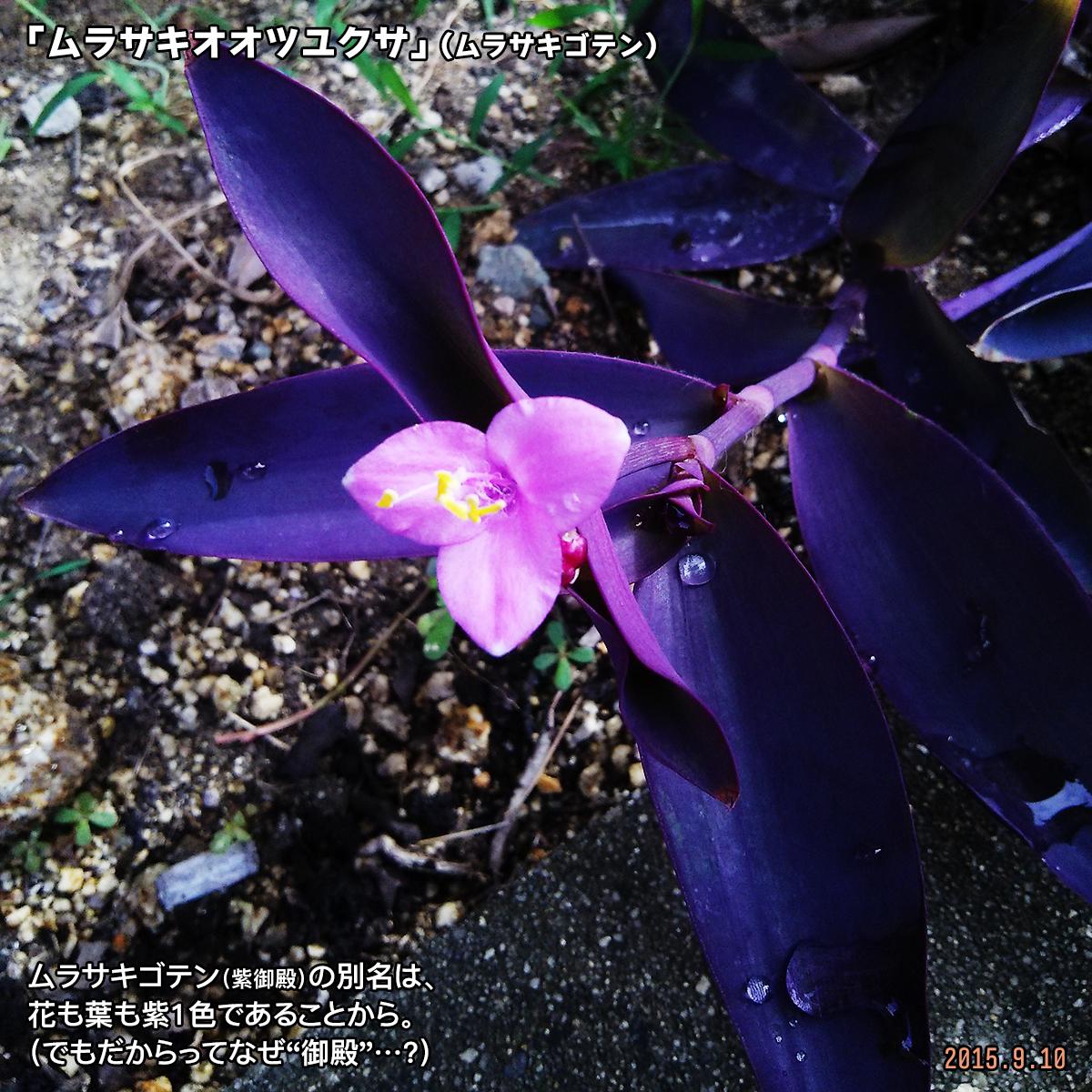 DSC_1006_20180124161757a9f.jpg