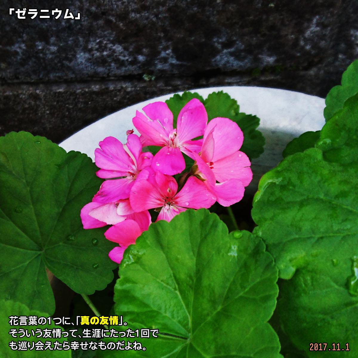 DSC_4763.jpg