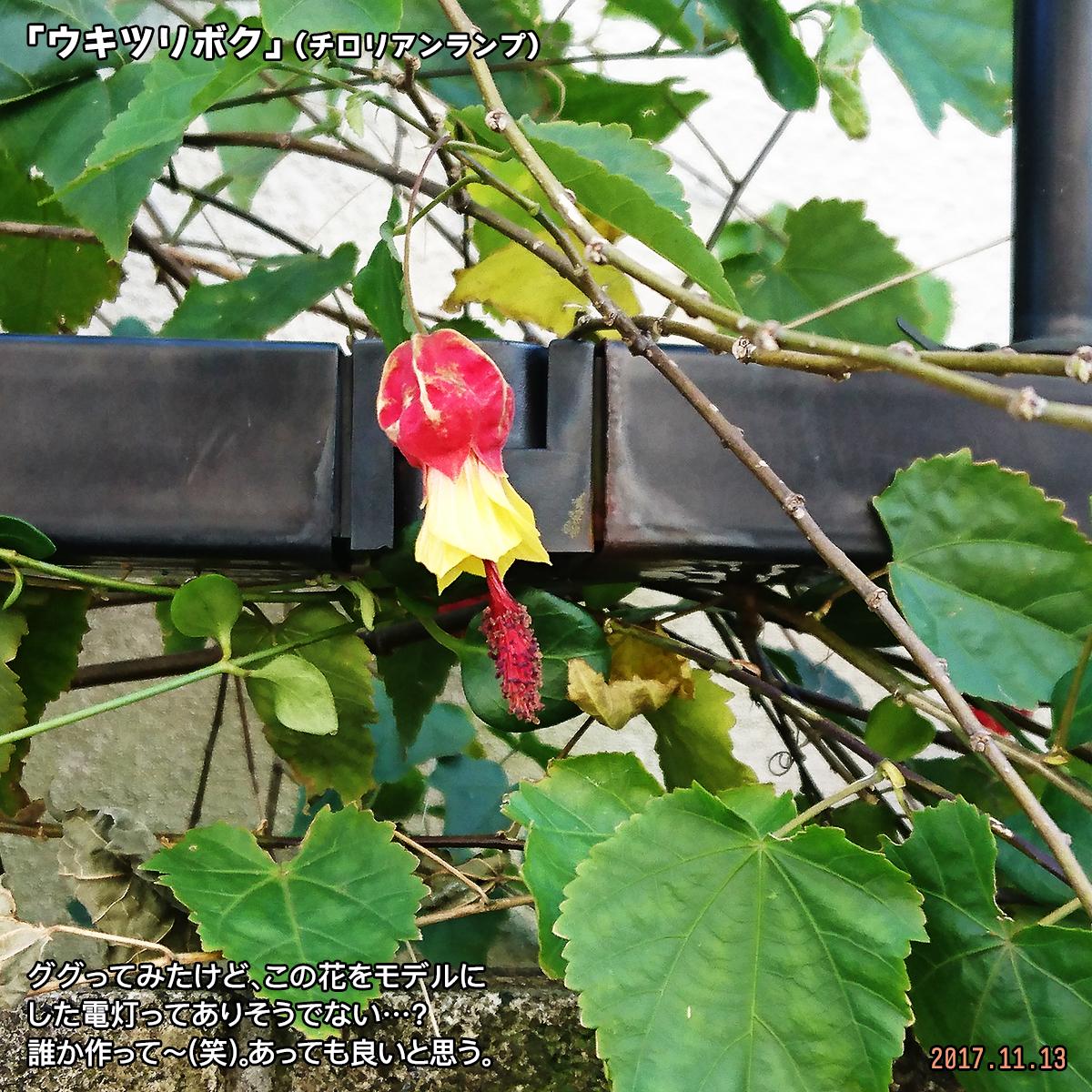 DSC_4844-1.jpg