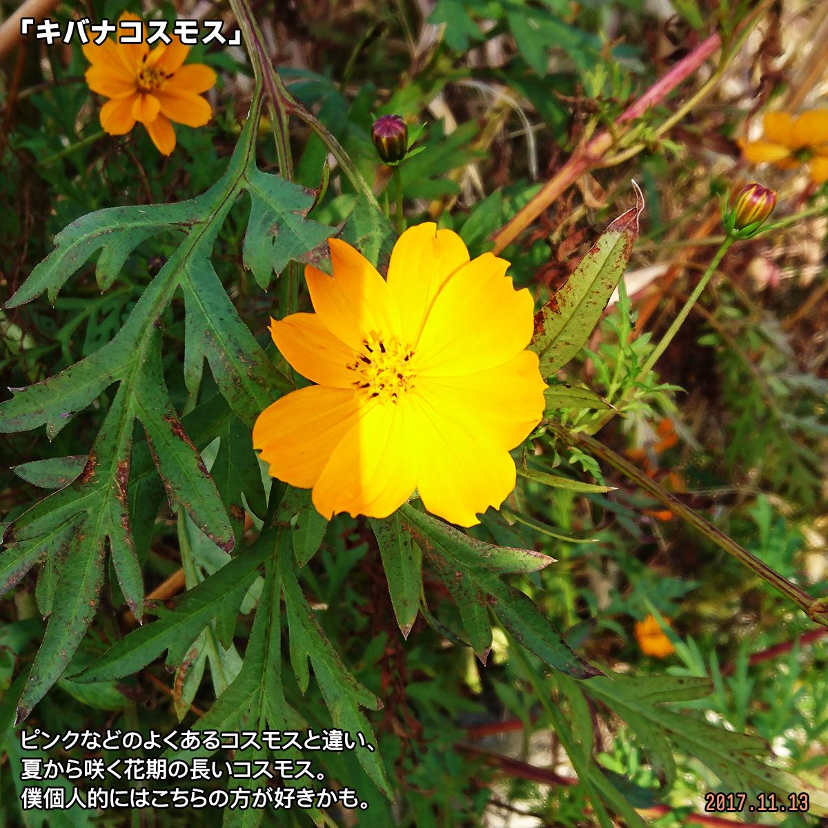 DSC_4858.jpg