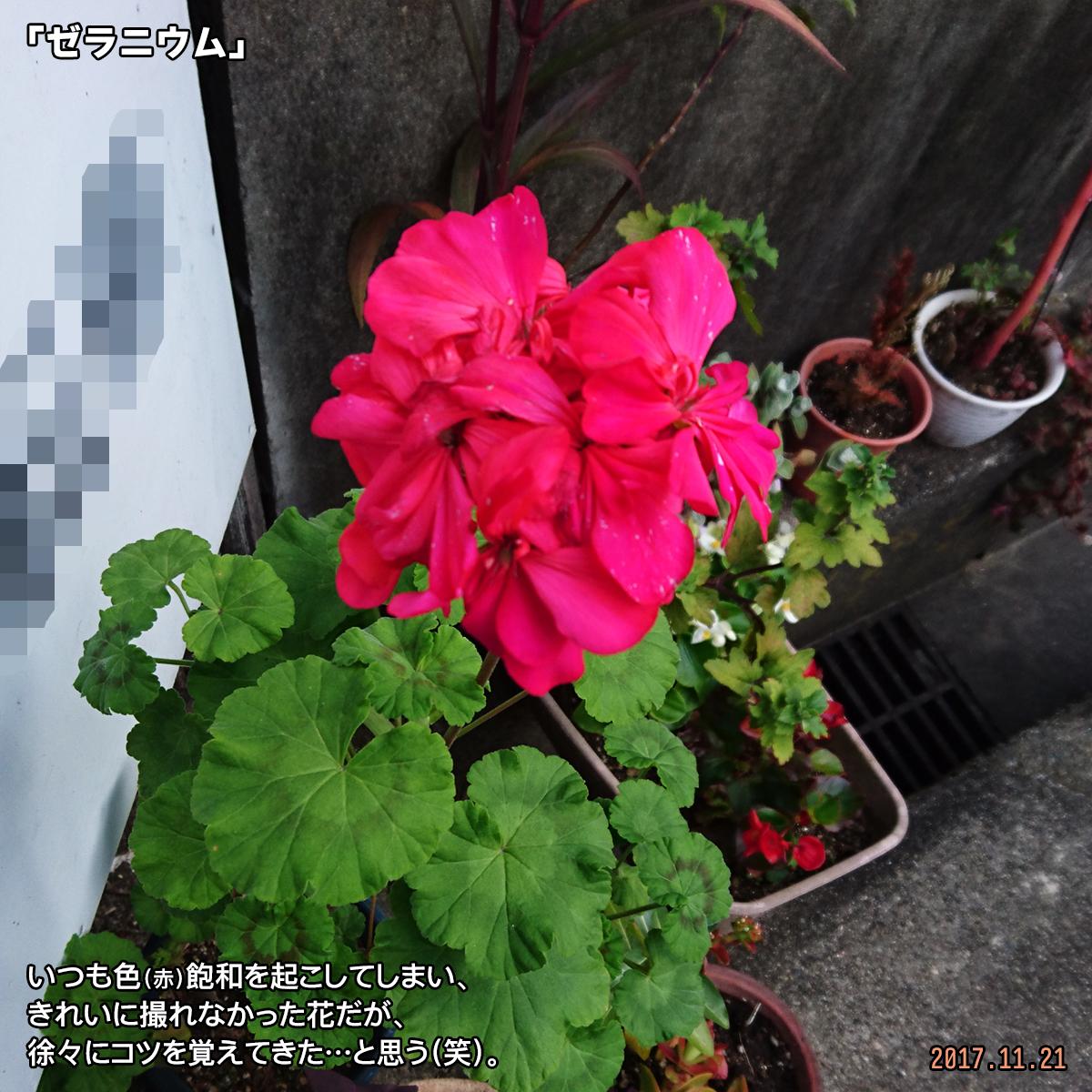 DSC_4995_20171202192052e08.jpg