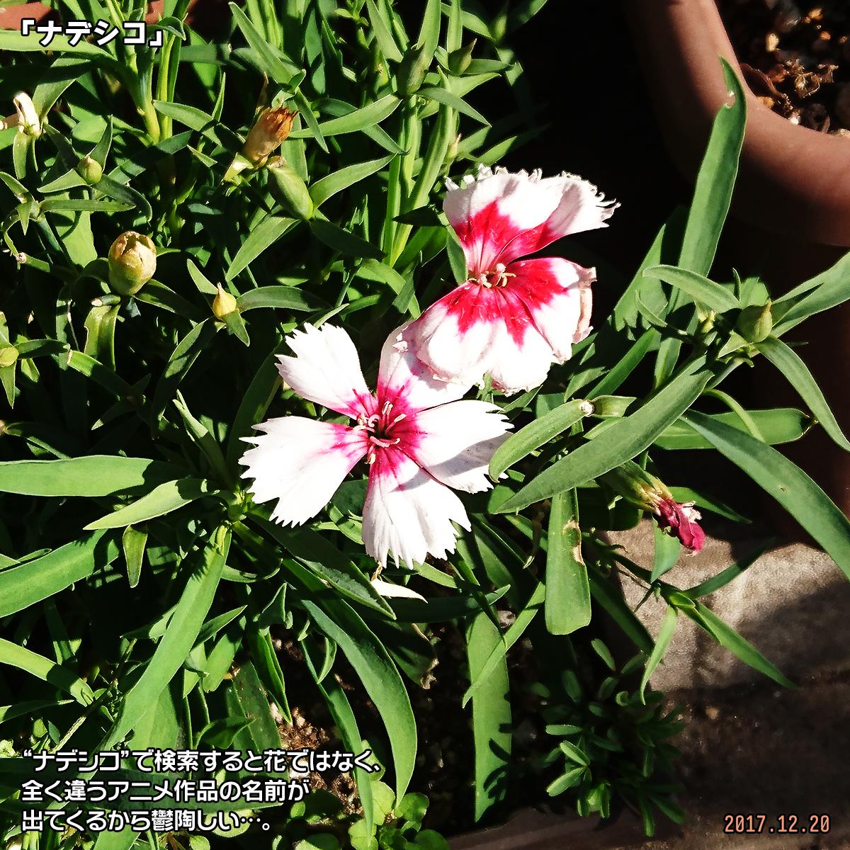 DSC_5293.jpg