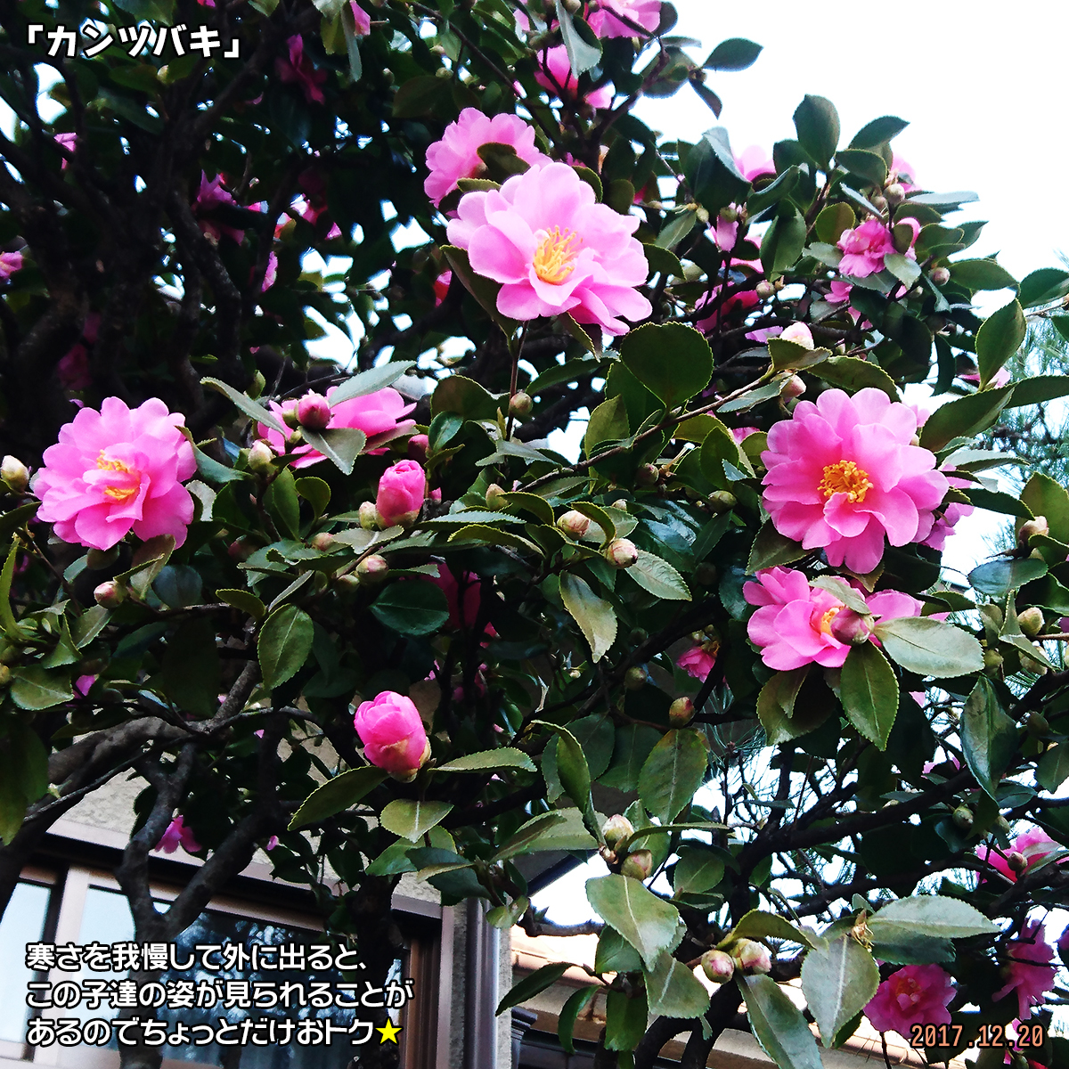 DSC_5342.jpg