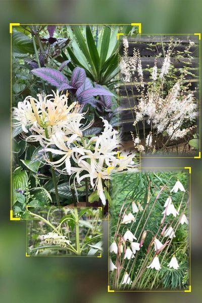 10,3秋の白花
