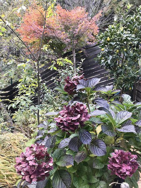 11,26北東の庭
