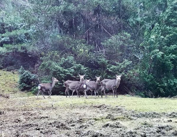 1,3鹿さんたち