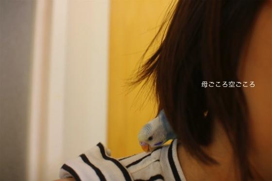 sIMG_0961-PIYO.jpg