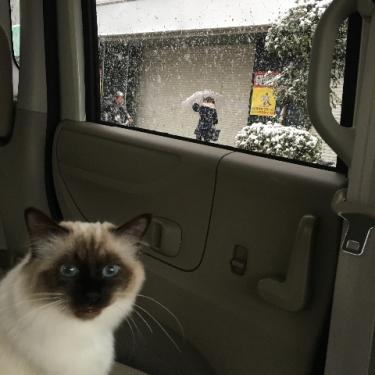 大雪の日の車内で