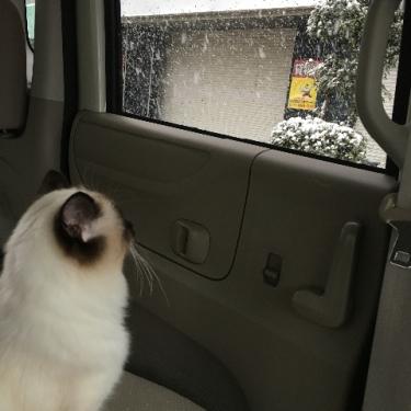 大雪の中の車内で