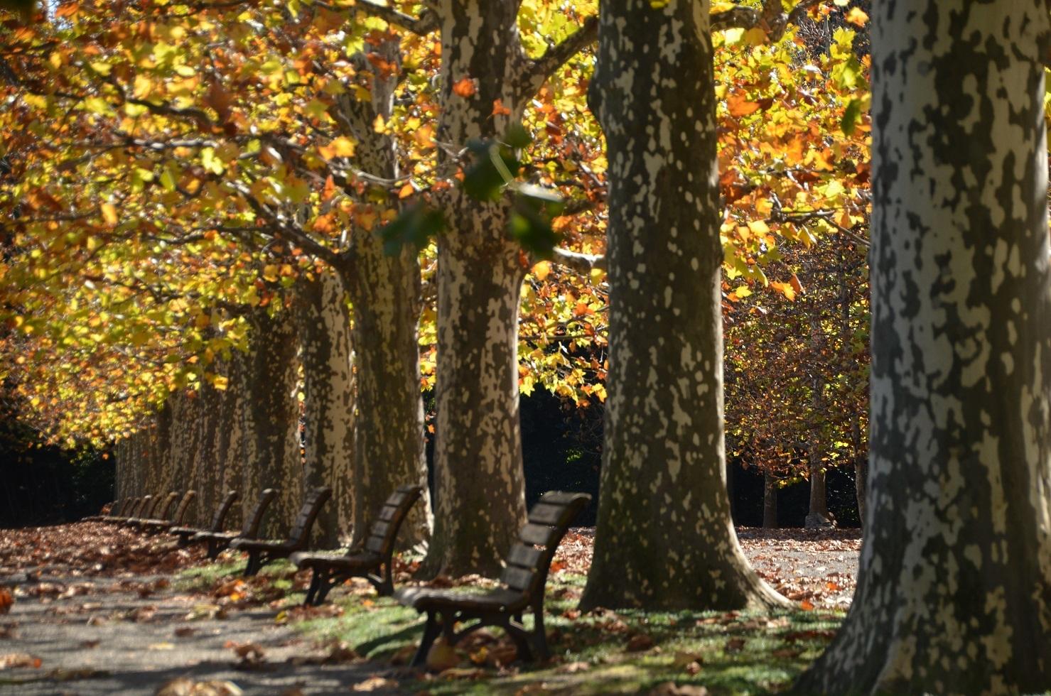 DSC_0255ユリの木ベンチ