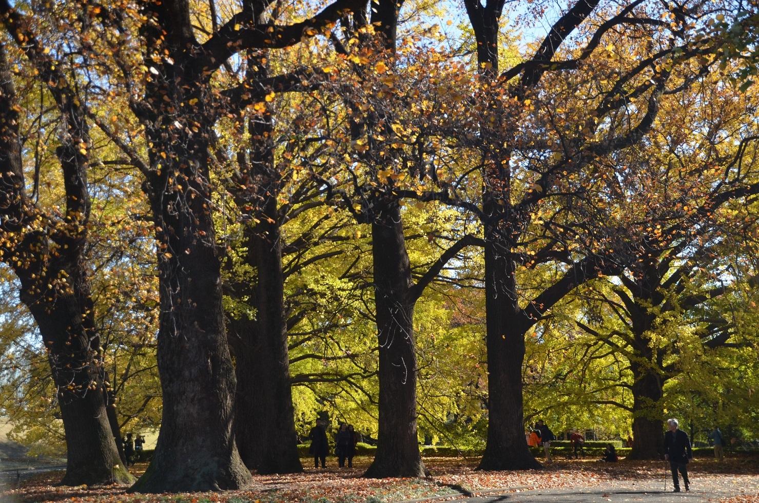 DSC_0244ユリの木と人