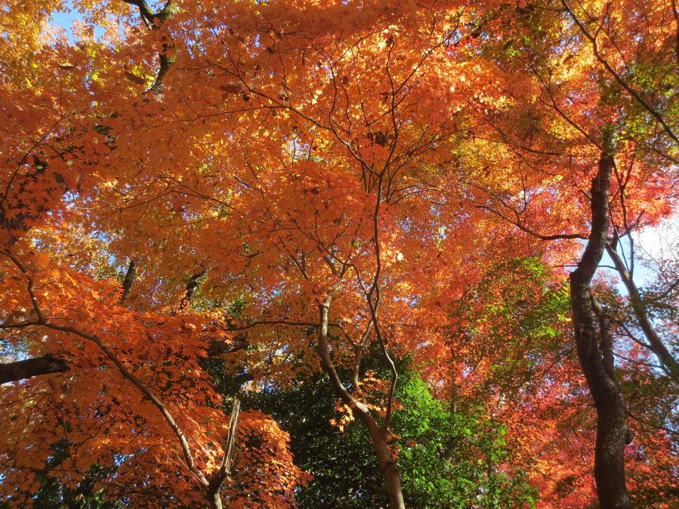 IMG_1618狭山湖紅葉
