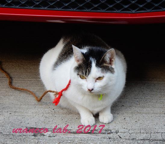 12月26日繋がれた猫6