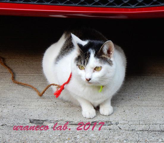12月26日繋がれた猫5