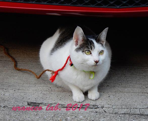 12月26日繋がれた猫2