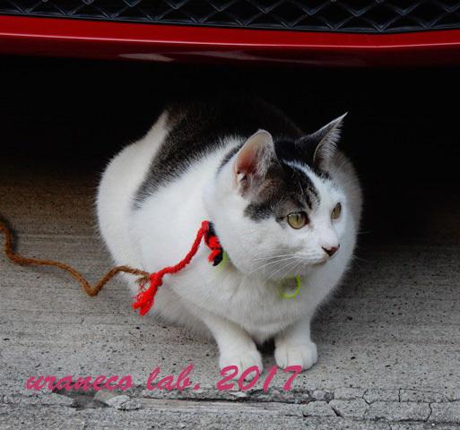 12月26日繋がれた猫
