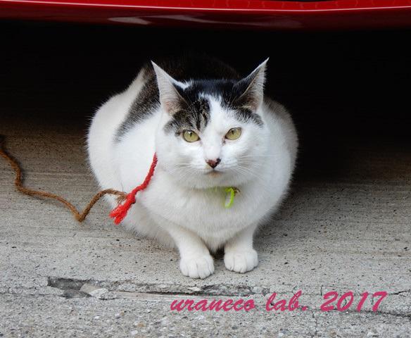 12月26日繋がれた猫4