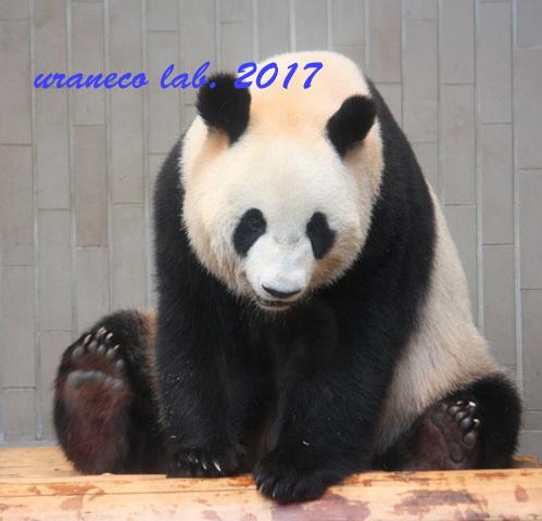 12月26日パンダ