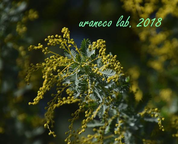 12月21日春への準備2
