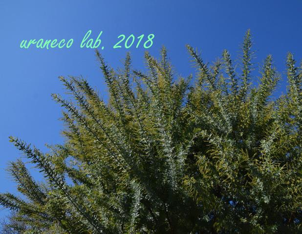 12月21日春への準備