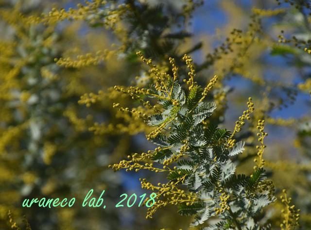 12月21日春への準備3