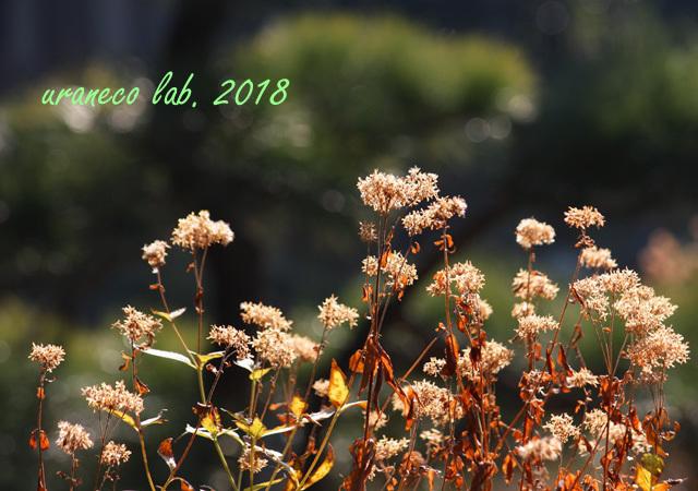 1月5日冬枯野3