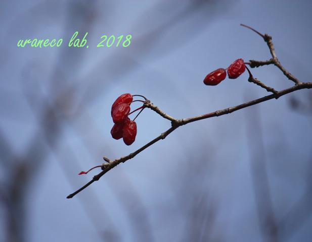 1月5日冬枯野2