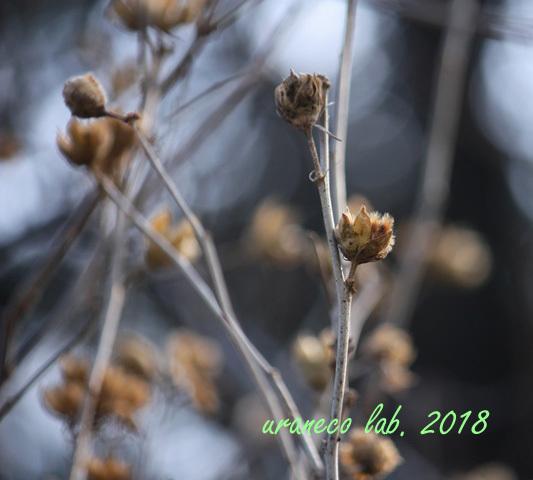 1月5日冬枯野