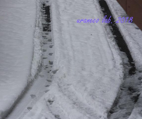 1月23日雪5