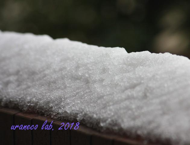 1月23日雪4
