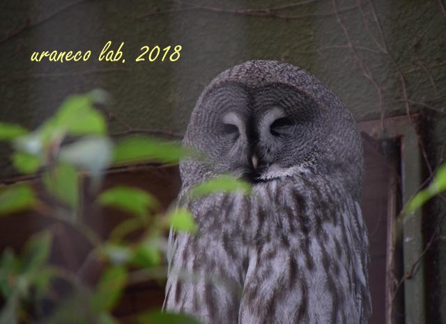 1月25日動物園8