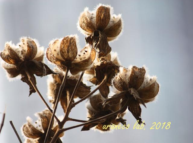 1月24日冬枯野
